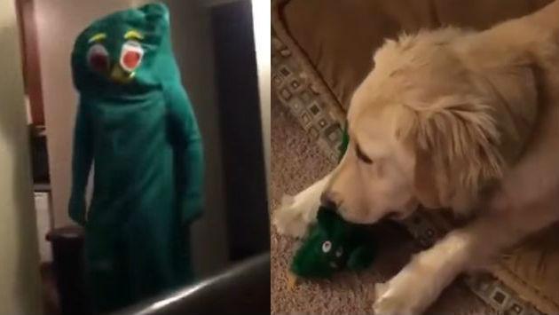 ¡Se disfrazó del juguete favorito de su perro y este reaccionó así!