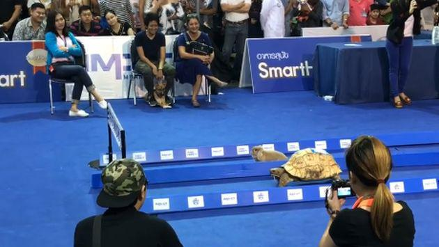 ¡Una liebre y una tortuga se enfrentaron en carrera y este fue el resultado!
