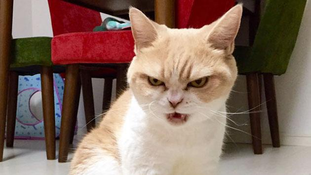 Tu gato puede matarte, y no es broma