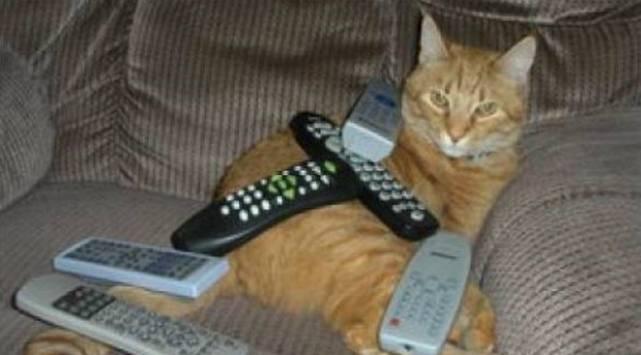 ¿Por qué los gatos actúan tan raro? este video te lo explica