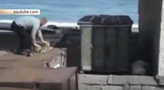 Hombre arrojó a un perro para salvar a una mujer de un oso polar