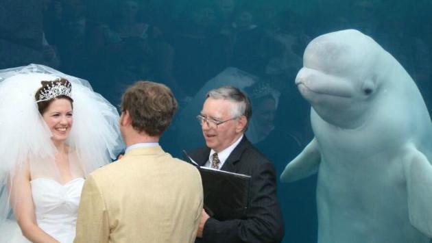 ¿Una ballena interrumpió un matrimonio? Mira esta divertida foto