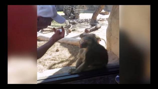 ¡No creerás la reacción de este mono ante un truco de magia! [VIDEO]