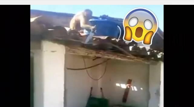 Mono amenaza a la gente con un cuchillo y causa pánico