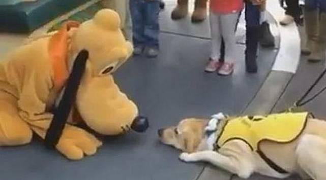 No creerás lo que hizo este perro cuando vio a 'Pluto'