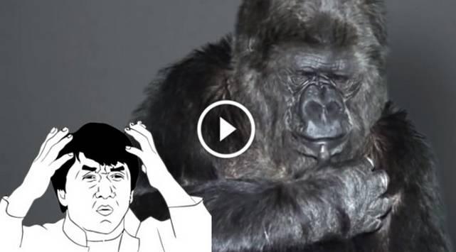 WTF?! Gorila envía un mensaje a los humanos a través de lenguaje de signos