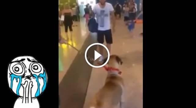 Perro ve a su amo después de tres años y su reacción conmovió a las redes sociales