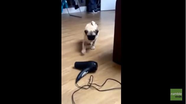 ¿A qué le teme este perro? Vacílate con este video