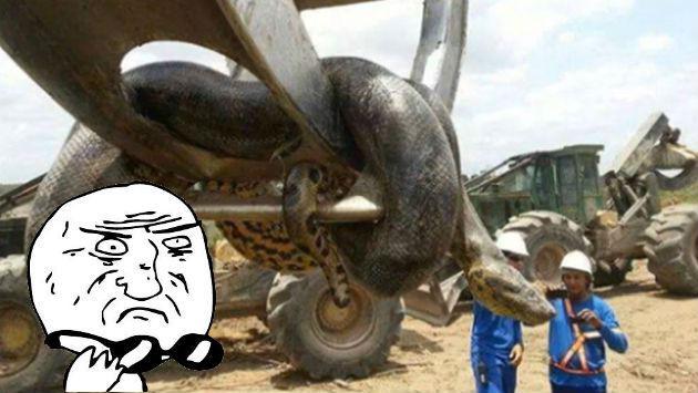 En plena construcción encontraron a la que sería la serpiente más grande del mundo