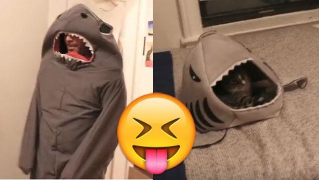 ¡Se disfrazó como el juguete de su gato y así le fue! [VIDEO]