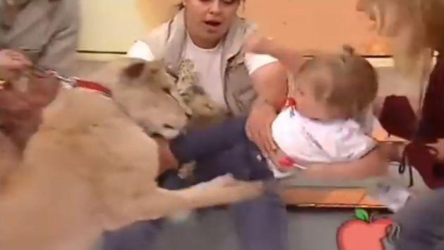 ¡Leona atacó a una niña y reacción de entrenadora genera polémica en redes!
