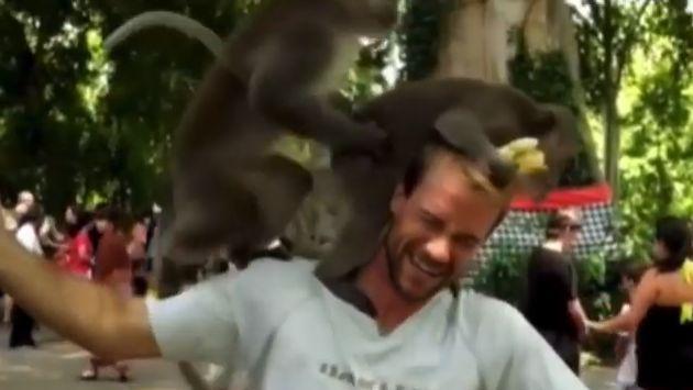 ¡Estos monitos se pusieron 'calentones' en el hombro de un turista!