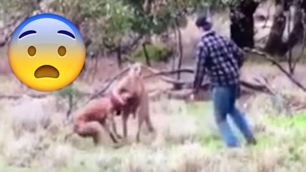 Se 'disfrazó' de boxeador para salvar a su perro del ataque de un canguro [VIDEO]
