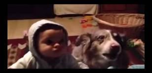 YouTube: Perro aprende a decir mamá antes que bebé