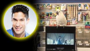 Esta cacatúa demuestra que es más fan de Chyno Miranda que tú [VIDEO]