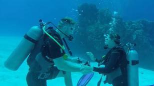 Propuesta de matrimonio bajo el agua se vuelve viral [VIDEO]