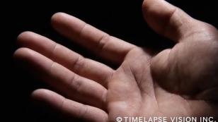 Cámara microscópica captó cómo transpiran las yemas de los dedos [VIDEO]