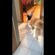 """¡Mira a este bebé y a este perro """"competir"""" en salto! (VIDEO)"""