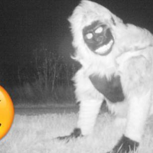 Colocaron una cámara oculta para descubrir qué animal rondaba la zona y descubrieron esto [FOTOS]