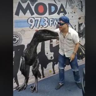 ¿Ya viste a la nueva y terrorífica mascota de Jojojonathan? [VIDEO]