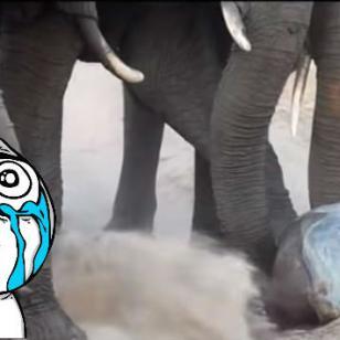 ¡Este bebé elefante te conmoverá! Mira el video